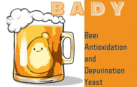 澳大學生iGEM項目: BADY-抗氧化及去除嘌呤啤酒酵母菌株的製作