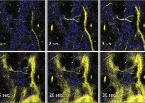 澳大健康科學學院研發創新磷光探針助精準切除腫瘤